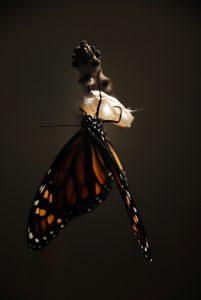 butterfly-1518059_1280